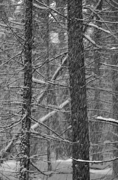Adirondack Park etching Snowy Woods etching by AngellFineArtsLtd, $275.00