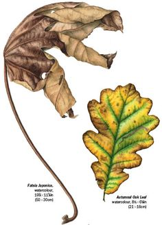 How to Paint Leaves in Watercolour with botanical artist Julia Trickey