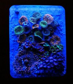 Reef Aquarium BY Blue World Aquariums