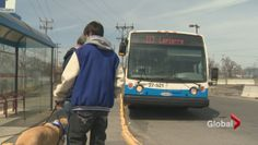 Teen alleges STM won't let him ride bus with service dog - Montreal | Globalnews.ca