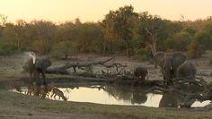 (3) Twitter National Geographic Wild, African Safari, Elephant, Live, Twitter, Animals, Animales, Animaux, Elephants