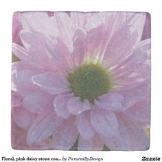 Floral, pink daisy stone coaster