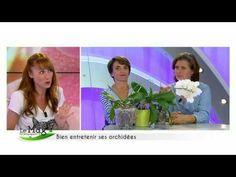 Comment entretenir les orchidées - Détente Jardin