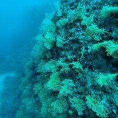 Ayvalık dalış okulu - ida dalış merkezi #scuba #scubadiving #diving #underwater #dalisnoktam #ayvalikdalis #ayvalikscuba #idadiving #dalismerkezi #dalışokulu #daliskursu #idadalismerkezi www.idadiving.com