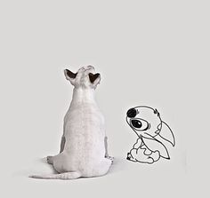 Stitch and Bullie - could be from the same planet?