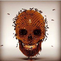 Skull Honey Comb