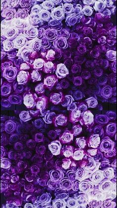 39 Ideas purple wallpaper phone backgrounds beautiful for 2019 Purple Love, Pastel Purple, All Things Purple, Purple Flowers, Rare Flowers, Yellow Roses, Pink Roses, Purple Thoughts, Purple Art