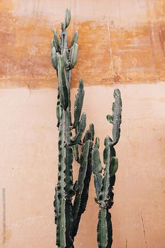 Cactus against orange wall by Maja Topcagic for Stocksy United