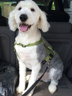 Pin On Old English Sheepdogs