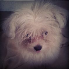 my little love Lola