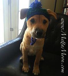 MettaMoon Puppy Beanie Green/Blue Every puppy needs one! :-) www.MettaMoon.com