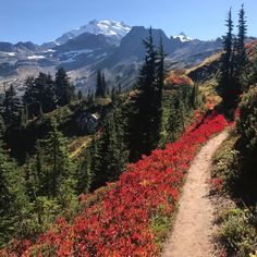 Pacific Crest Trail - early fall days and blueberry bushes painting the hillside red - Glacier Peak Wilderness Washington [OC] - [1920x1080] (Glacier Peak) follow along my other adventures on Instagram @momentsthroughaaron - Author: akuntzelman