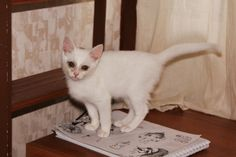 My lovely white cat