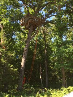 ShEagle - human size eagle's nest -  30 feet above - raised up to it by battery operated wench. Come meditate in the 360 degree view. Message to book it.