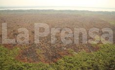 Honduras: Masiva campaña de reforestación planean en parque Jeannette Kawas  La alcaldía de Tela organizará una marcha en apoyo al parque. Más de 400 hectáreas del hábitat de especies de flora y fauna fueron devastadas por el fuego durante cinco días.