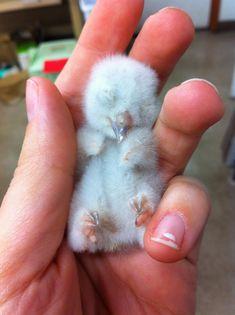 (X-post owls) A newborn screech owl to celebrate my cake day :)