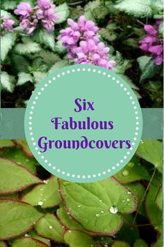 http://www.landscape-design-advice.com/ground-cover-perennial.html Discover 6 fabulous perennials that you can't go wrong with...my very favorites. Low maintenance and hardy also.