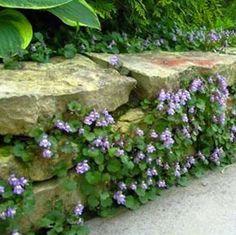 Garden along rock fence