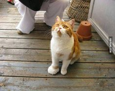 Kitty stepped on a bee. Poor kitty!