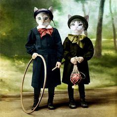 dos gatas