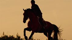 An animation of a horse and rider galopping in slowmotion.