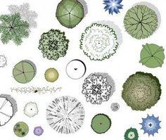 landscape design tree symbols - Google Search