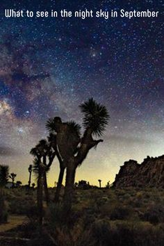What to see in the night sky in September Perseid Meteor Shower, Apollo 11 Mission, Moon Missions, End Of Summer, Get Outside, 50th Anniversary, Natural World, How Beautiful, Night Skies