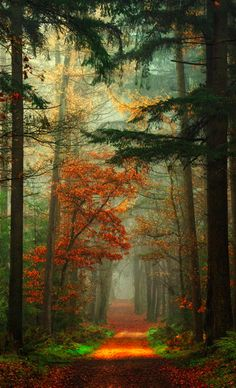 //Trees and Autumn path in the Netherlands #trees  photo: Lars van de Goor on 500px
