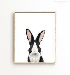 Animals with White Backgrounds Baby Donkey, Baby Cows, Baby Horses, Baby Opossum, Baby Skunks, Dutch Rabbit, Funny Bathroom Art, Baby Lamb, Horse Print