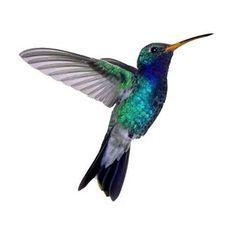 hummingbird tattoo shoulder - Google Search