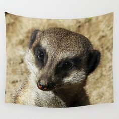 MM - Suricate portrait Wall Tapestry A sweet looking meerkat  nature, animal, face, fauna