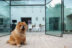 Luxury homes featuring the 4 legged friends who live in them.