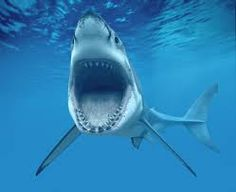 Shark Island! 16 people Attacked by Sharks in 5 years