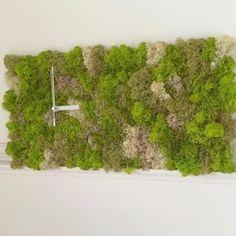 受注製作です。 只今8日前後かかります。北欧のツンドラ地帯でとれるモス苔を プリザーブド加工した綺麗な色のグリーン四角型ウォールクロックです。 モスの良い部分だけを贅沢にふんだんに使いました。ナチュラルグリーンのきれいなシンプルかつおしゃれな壁掛け時計。 壁に掛けるだけでお部屋のアクセントに! プレゼントや記念品にもおすすめです存在感たっぷりでお部屋に自然を感じられとても緑が映えます。※受注後に制作size25cmx25cmデリケートな素材のため、触れたりすると手に付いたり植物がほころびてお部屋に落ちる恐れがあります。お取り扱いにご注意ください。 こちら着色しているためモスが付着していると壁に色が写ってしまう場合がございます、十分にご注意下さい。長い時間日光が当たる場所、熱を出すキッグや火気に近い場所、湿気の多い場所(浴室など)、激しい振動のある場所、モスの変色、電気部品が壊れる場合がございます。電池交換は早めに行って下さい、時計が動いていても1年後には新しい電池と交換して下さい。要単三電池1本check my…