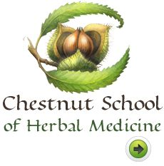 Visit the Chestnut School of Herbal Medicine on the web