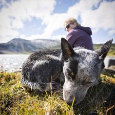 Ryan Carter wanted an excuse to spend more time with his dog cooper, so he started the company Camping With Dogs. The Nashville, Tennessee entrepreneur's goal Aussie Cattle Dog, Austrailian Cattle Dog, Cattle Dogs, Best Dog Breeds, Best Dogs, Hiking Dogs, Dog Life, Farm Life, Dogs And Puppies