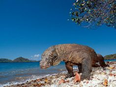 Indonesia's Komodo National Park
