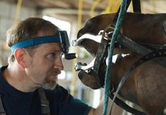 Common Signs of Dental Problems in Horses