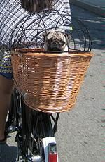 Dog Baskets For A Bike Basil Wicker Quick Release Rear Bike Dog