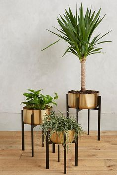 Rossum Metallic Plant Stand | Anthropologie