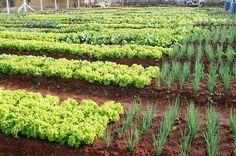 Organic Gardening For Dummies Vegetable Farming, Vegetable Garden Design, Fruit Garden, Edible Garden, Organic Farming, Organic Gardening, Gardening For Dummies, Dig Gardens, Garden Online
