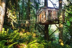 TreeHouse Point, a unique Bed and Breakfast that lets you spend a night in the trees!