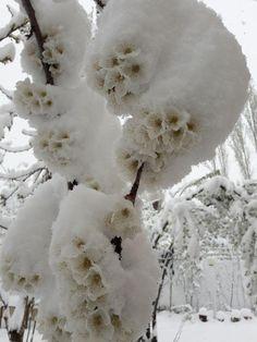 Snow Blooms by Nader Rangidan