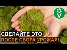 Berries, Herbs, Fruit, Youtube, Gardening, Sodas, Lawn And Garden, Herb, Youtubers