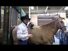 Equine Massage Techniques using the Equisports Massager with Zach Hedberg http://horsemassagers.com/
