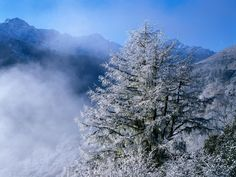 Best winter wallpaper, desktop background for any computer, laptop, tablet and phone Snow Photography, Outdoor Photography, Travel Photography, Digital Photography, Photography Ideas, Foggy Mountains, Scenery Background, Winter Wallpaper, Winter Scenery