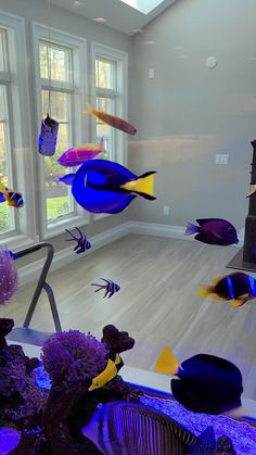 Sneak look at clients tank - By Aqua Creations. Enjoy the Saltwater Aquarium with some beautiful fish - Angles, Tangs, Clownfish and much more.