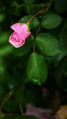 La flor es la extensión de la belleza de la mujer