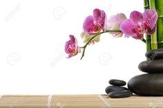 zen orchid - Google Search