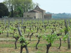 Eauze - Vineyard, it may not all be destined for brandy, drink like Armagnac may not have the production level of former times - Gers dept. - Midi-Pyrénées region, France      ...slowcamino.wordpress.com Pyrenees, South Of France, Vines, Vineyard, Plants, Wordpress, Travel, Outdoor, Viajes